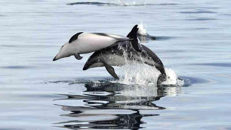 Ativistas protestam contra parque aquático nos EUA depois da morte de 4 golfinhos