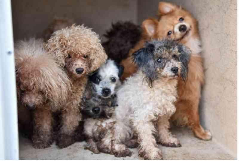 Cinquenta cachorros são resgatados de casa de homem encontrado morto em Palm Beach Gardens, EUA