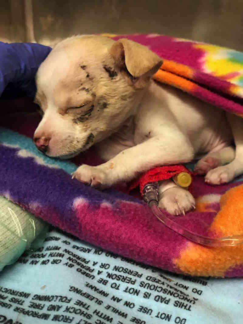 Pequeno cachorrinho de rua cai 'do céu' e, de alguma forma, sobrevive