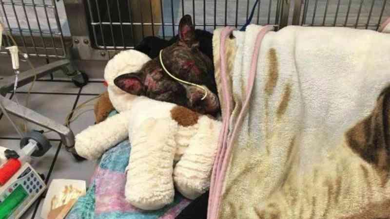 Legisladores aprovam a 'Lei de Tommie' para fazer com que crueldade contra animais seja crime na Virgínia, EUA