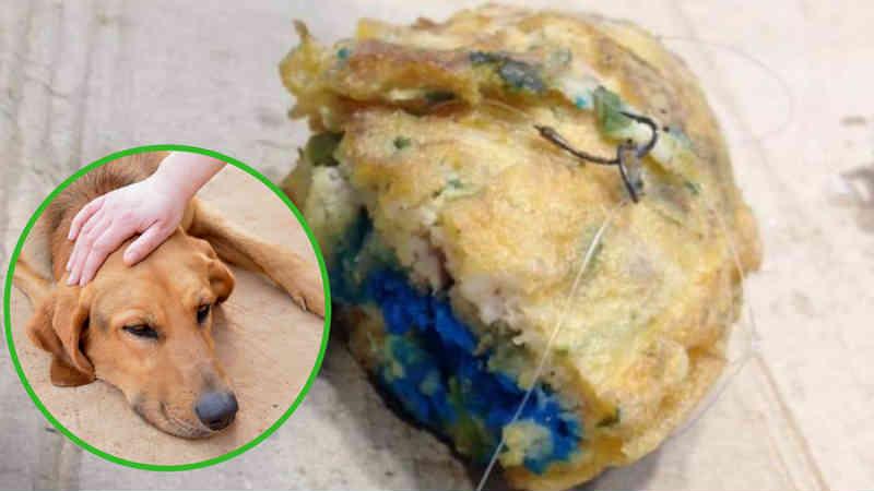 Denunciam homem que tentou assassinar um cão com uma tortilha envenenada na Espanha