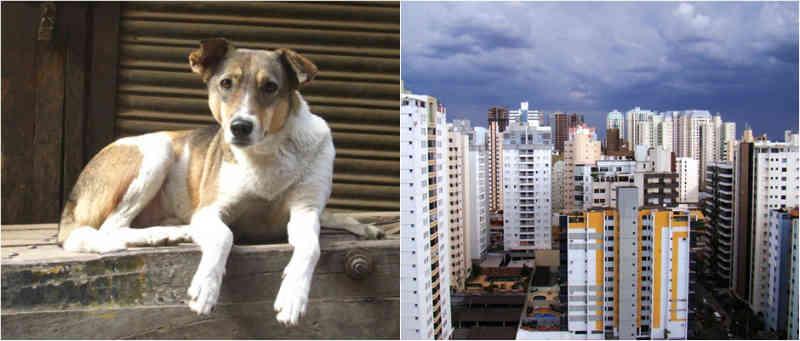 Adotar animais pode render isenção ou descontos em impostos municipais de Goiânia, GO