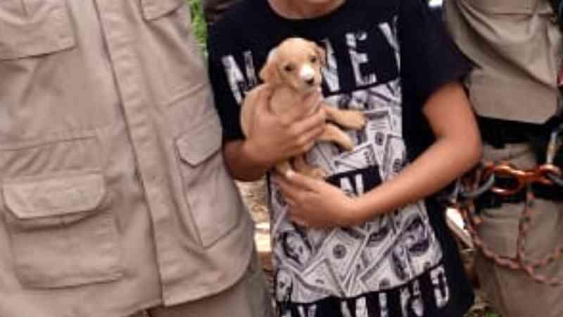Filhote de cachorro é resgatado ileso após cair em cisterna com mais de 6 metros de profundidade, em Goiânia