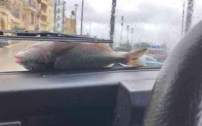Tempestade causa 'chuva' de peixes vivos e cobre estradas com animais, em Malta