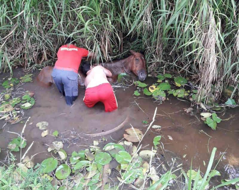 Corpo de Bombeiros de Barbacena (MG) resgata égua que caiu em riacho
