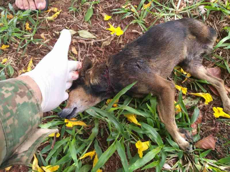 Cachorro é morto de forma brutal em Ituiutaba, MG; suspeito ainda não foi identificado