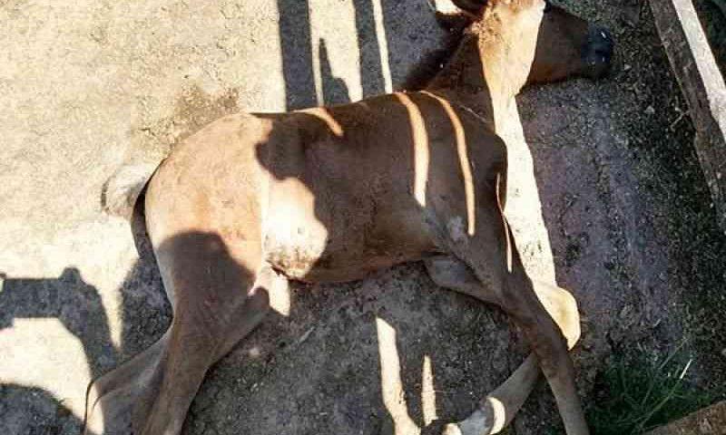 Filhote de égua é encontrado morto com sinais de estupro em Leopoldina, MG