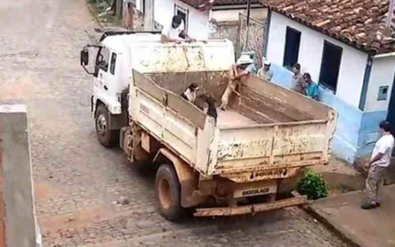 Cachorros de rua são recolhidos por caminhão da prefeitura e despejados em lixão de Abre Campo, MG