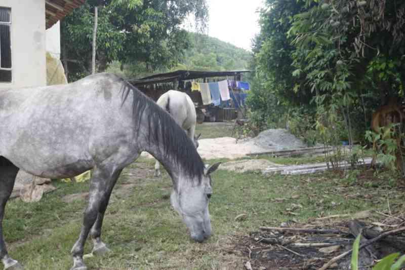 MP quer plano emergencial para resgatar animais em caso de rompimento de barragem em Barão de Cocais, MG