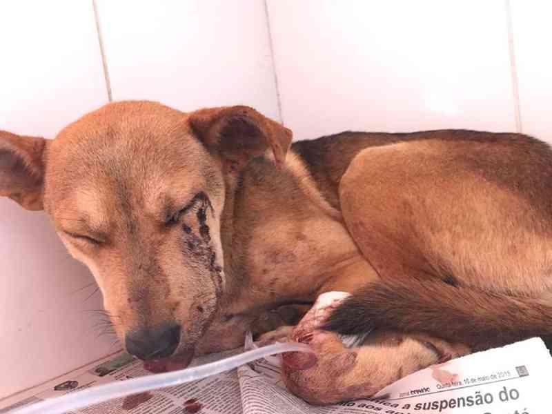 Dono de sítio que atirou em cadela paga R$ 4 mil para ONG após acordo com a Justiça de MG