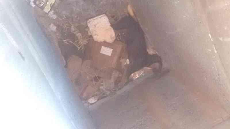 Cachorro é resgatado de um bueiro de dois metros de profundidade, às margens da BR-135, em Montes Claros, MG