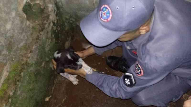 Filhote foi resgatado pelo Corpo de Bombeiros — Foto: Corpo de Bombeiros/Divulgação