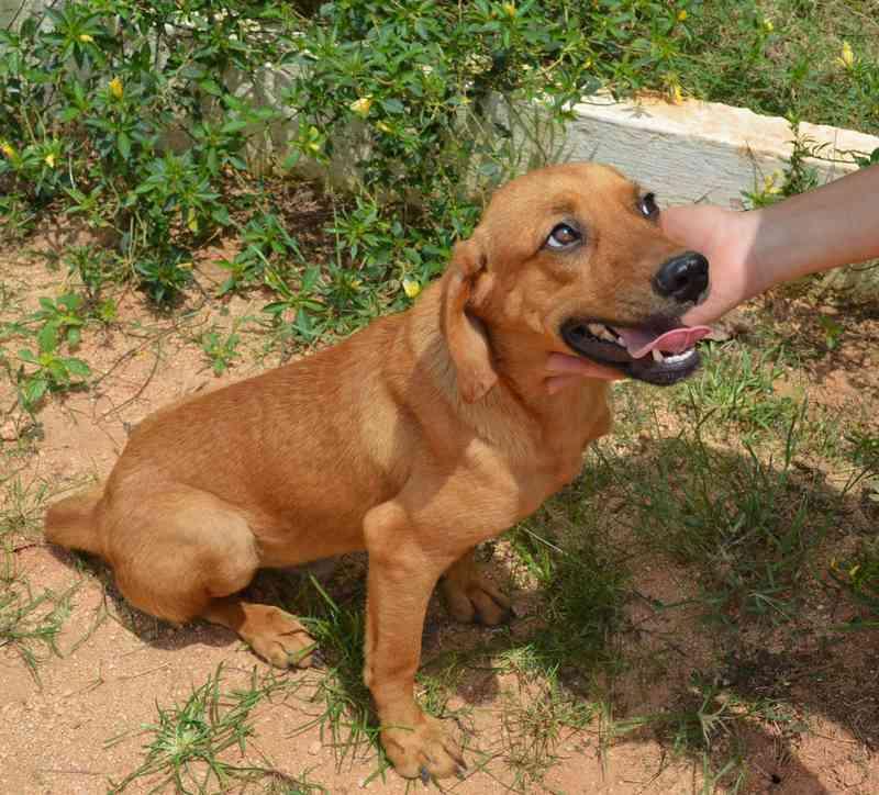 Na primeira etapa do programa em Uberaba, serão castrados cães machos pelo método farmacológico — Foto: Prefeitura de Muriaé/Divulgação