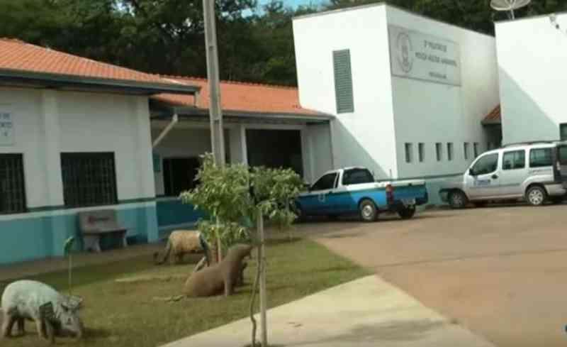 Homem é multado em R$ 500 por maus-tratos a mula em Campo Grande, MS