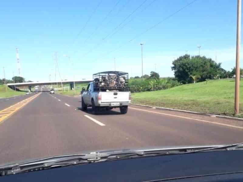 Motorista fica indignada com 'superlotação' de animais em camionete