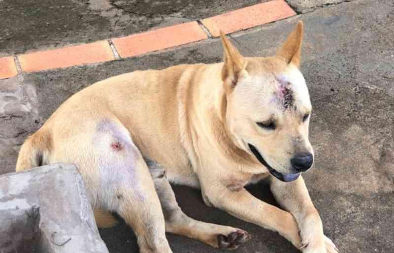 Polícia Civil investiga disparo de chumbinho contra cão em Costa Rica, MS