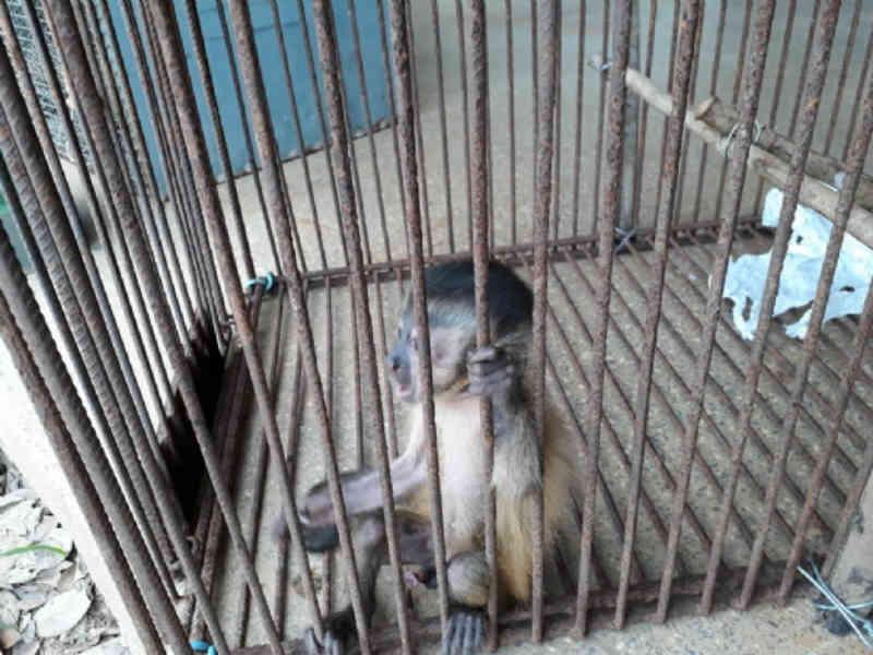 Jabutis, cobras e macaco são resgatados de cativeiro e responsável é detido em Araputanga, MT