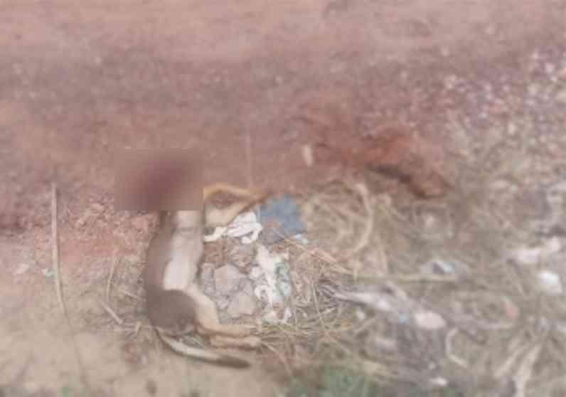 Cachorra de dois meses é degolada com facão por vizinho em Cuiabá