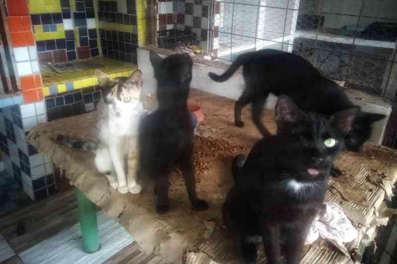 Gatos são vítimas de preconceito e violência extrema, denuncia ong de Cuiabá