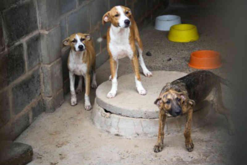 Por dívida de R$ 130 mil, Opa-MT pode ter animais despejados