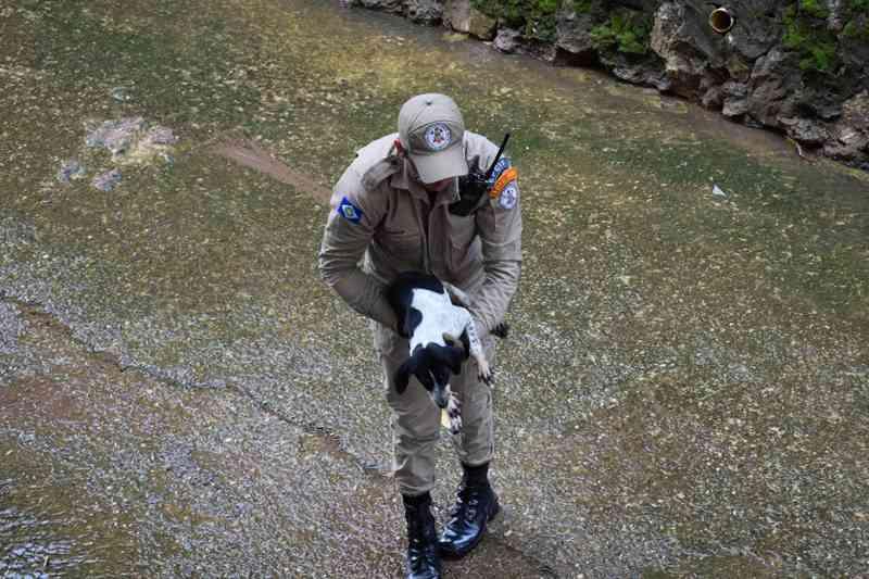 Debilitada, cadela é resgatada pelos bombeiros em vala após chuva forte e será colocada à adoção em MT