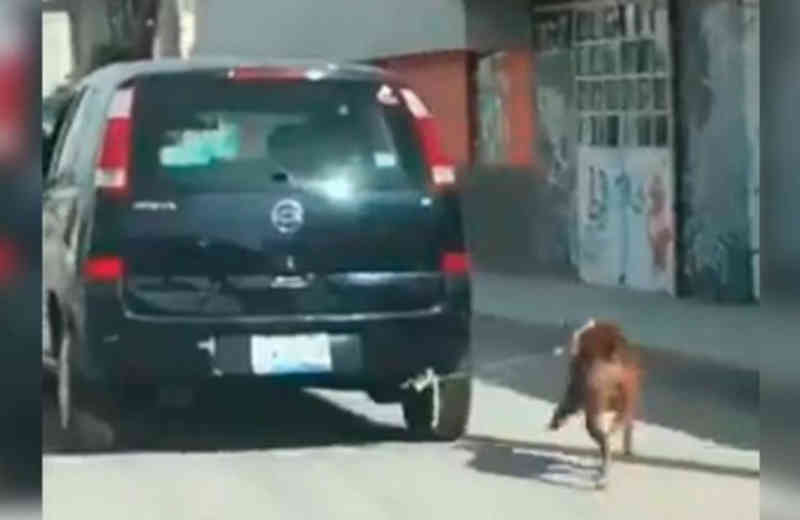 Cão é amarrado a um carro e arrastado pelas ruas de Puebla, no México