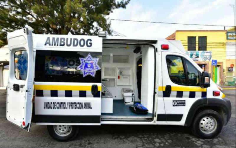 México terá sua primeira ambulância para atender os cães atropelados ou maltratados