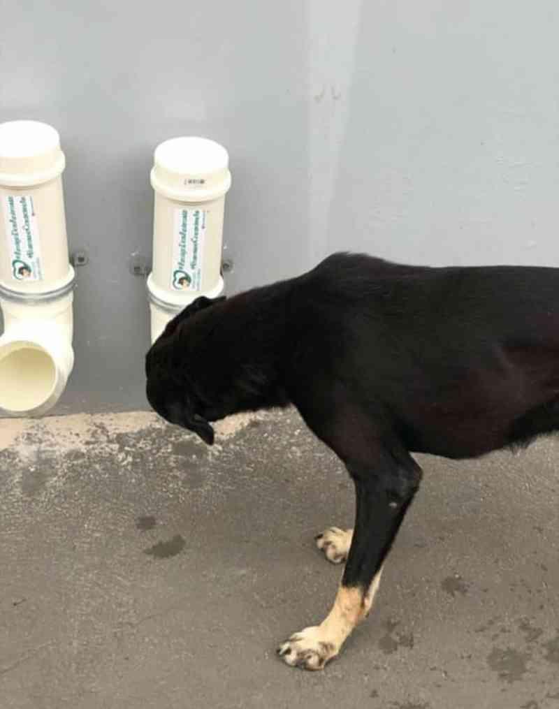 Comedouros públicos alimentam cães e gatos abandonados nas ruas de Santa Izabel do PA