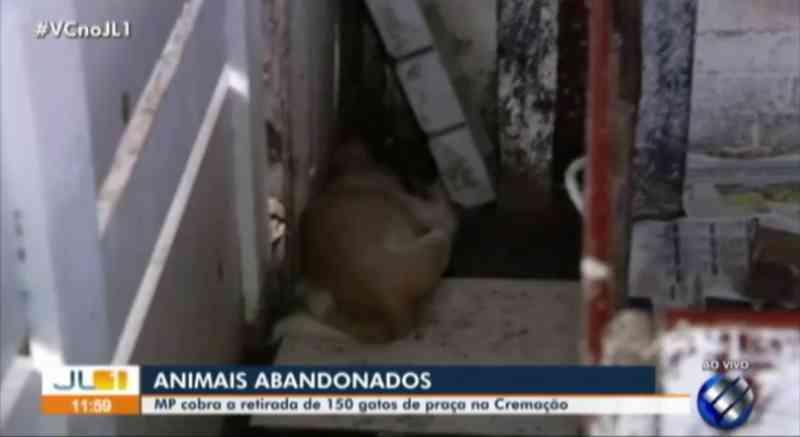 MPPA solicita liminar para a retirada de 150 animais abandonados na praça Dalcídio Jurandir, em Belém