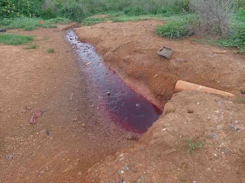 Matadouro que abate animais com marretadas nas cabeças é alvo de ação do MP no Pará