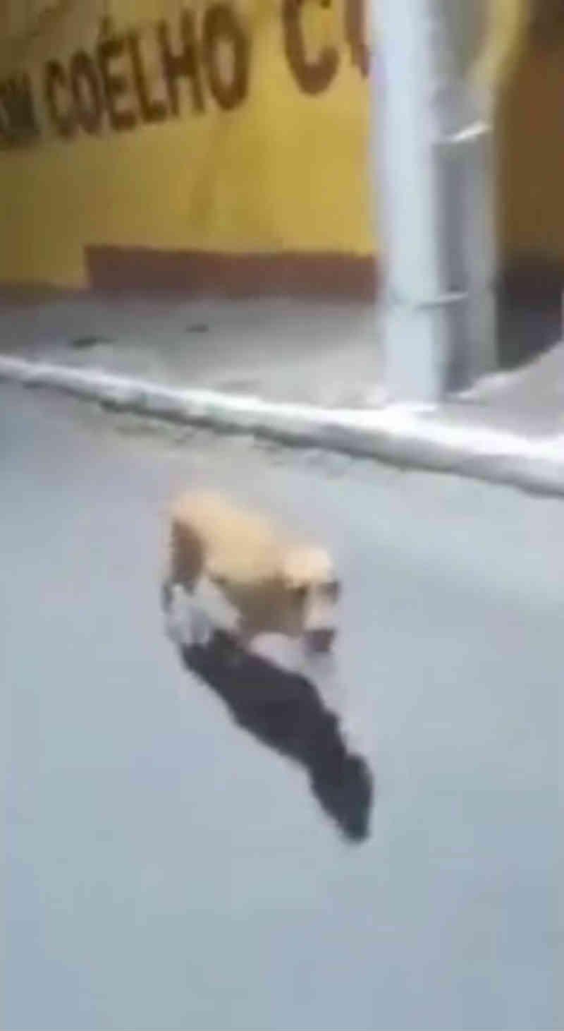 Cadela corre atrás de ambulância em que morador de rua foi socorrido em Mamanguape, PB