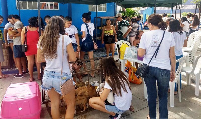 31 cachorros e 11 gatos agora estão em lares após feirinha promovida em Patos, PB