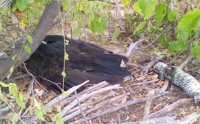 Cachorros e aves estão sendo envenenados no interior de Ouricuri, PE