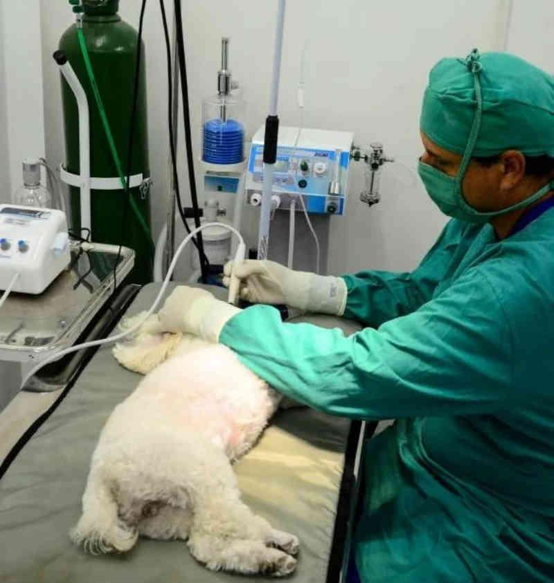 Prorrogado o agendamento de castrações gratuitas de cães e gatos em Recife, PE