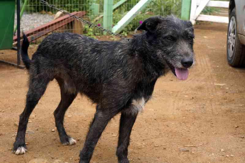 Suspeito de matar animais domésticos em Noronha paga fiança e é liberado