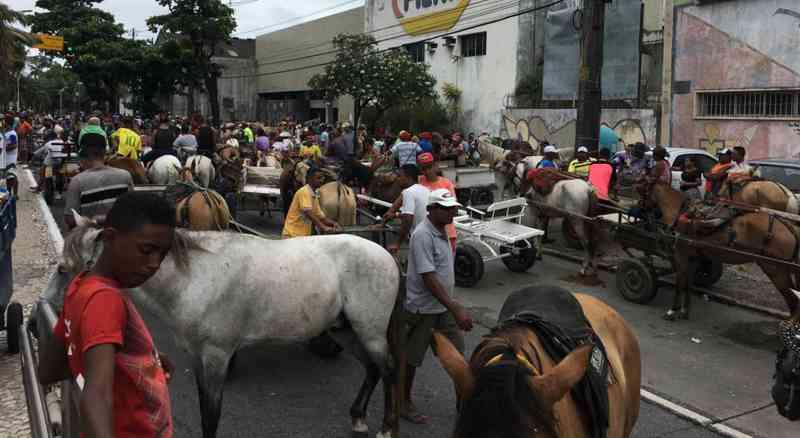 Carroceiros têm prazo de dois anos para a extinção de tração animal em Recife