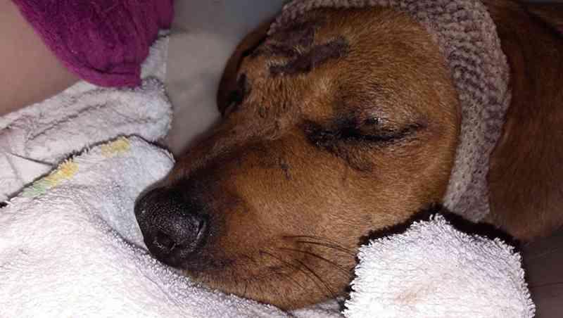 Petição pede prisão para homem que deixou cadela sem um olho