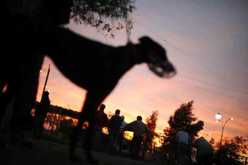 PAN quer proibir corridas de cães em Portugal