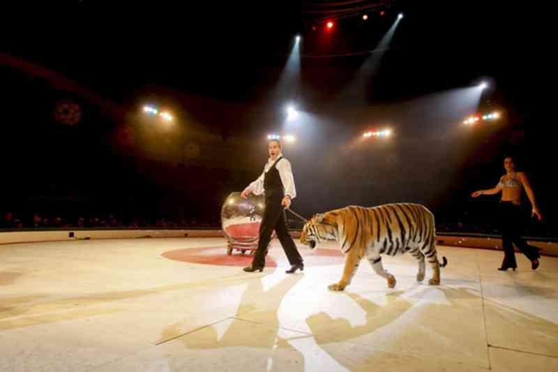 Presidente aprova diploma que determina fim de animais selvagens no circo em Portugal