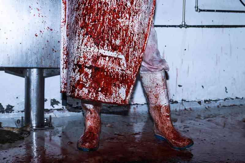 A vida (e a morte) dentro de um matadouro português