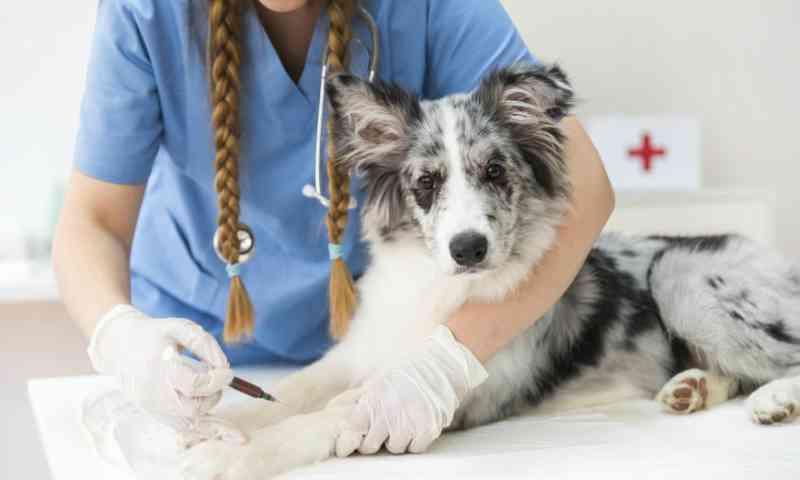 ONG Defesa Animal oferece castração de cães e gatos a baixo custo em Bela Vista do Paraíso, PR