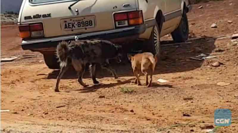 Abandono e envenenamento de cães preocupam moradores do Loteamento Mirante, em Cascavel, PR