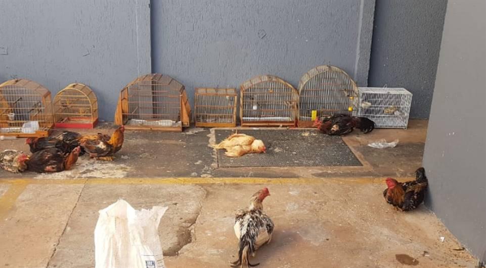 Polícia prende suspeitos e recupera animais utilizados em rinhas em Sarandi, PR
