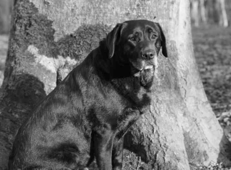 Crueldade: cachorra é encontrada enforcada em árvore na Cidade Industrial de Curitiba, PR