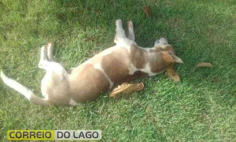 Morte de cachorros por envenenamento causa indignação em Entre Rios do Oeste, PR