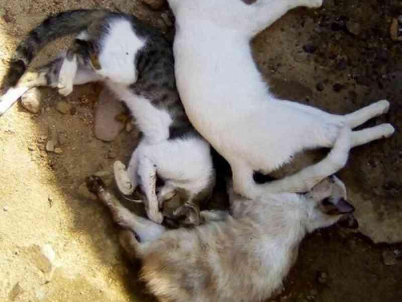 Gatos são envenenados em Saudade do Iguaçu, PR