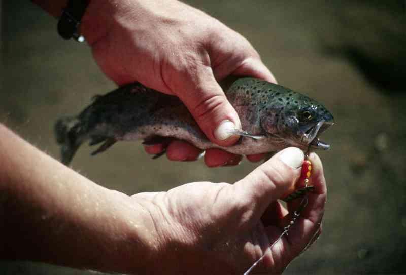 Pesca desportiva: 'captura e devolução' deixa peixes com dificuldades em se alimentarem