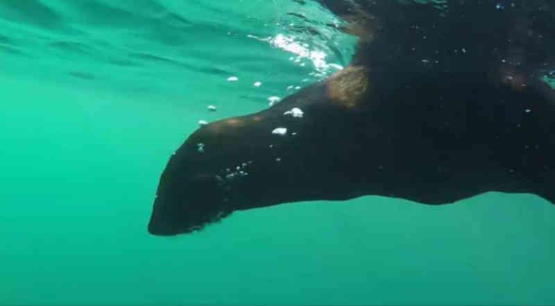 Animais resgatados no litoral do Paraná são devolvidos para a natureza