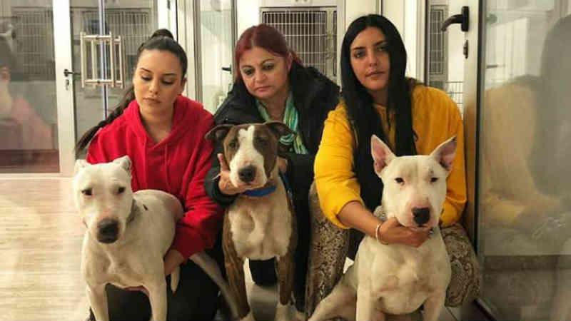 'Ajuda a Alimentar Cães' resgatou animais acorrentados e feridos no Funchal, Portugal
