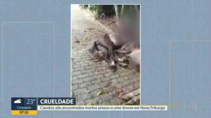 Tutor de cavalos que morreram enforcados é ouvido na delegacia e caso será encaminhado à Justiça